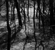 Scary Trees- Wattles in Kaiser Stuhl Conservation Park by Ben Loveday
