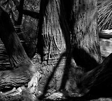 Scary Trees- Old Timers in the Kaiser Stuhl Conservation Park by Ben Loveday
