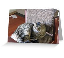 Aloyishes sunbathing on HIS Chair. South Australia. Greeting Card