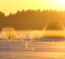 Golden morning  by Remo Savisaar
