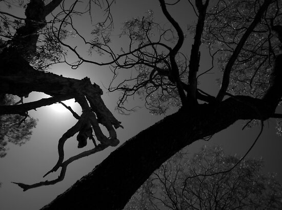 Scary Trees- Silhouette in Kaiser Stuhl Conservation Park by Ben Loveday