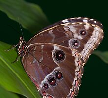 Butterfly by MarkElsworthPic