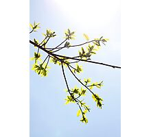 Green leaves in sunlight background Photographic Print