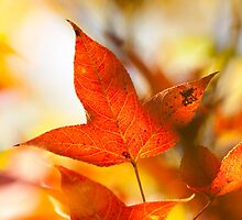 Autumn red leaves background by kawing921