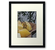 Transparency is a Wonderful Thing Framed Print