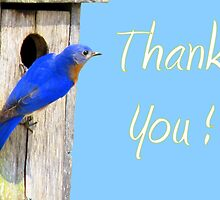 Eastern  Bluebird & His House - THANK YOU! by Jean Gregory  Evans