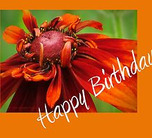 Echinacea - Happy Birthday by Jean Gregory  Evans