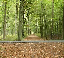 Danish forest colourful green  by FannyJo