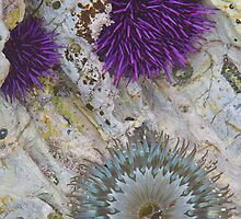 Tide Pool Arrangement by Tuan Le