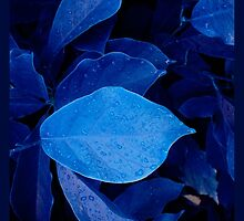 drops on blue by NafetsNuarb