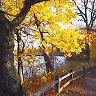 Autumn Path in the Park by Susan Savad