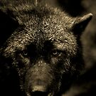 THE BLACK WOLF by Leny .