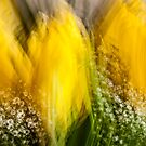 Yellow Tulip by maxblack