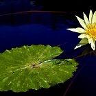 Water Lily - Yellow, Green Leaf by cclaude