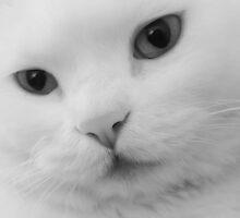 sweetie kitty  by Riko2us