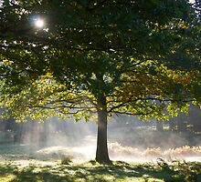 Misty Morning at Dunham Massey by dilyst