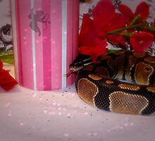 Princess Snake  by Skymall007