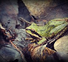 Tree Frog by Skymall007