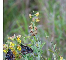 Butterflies In Unison  by lifeinfineart
