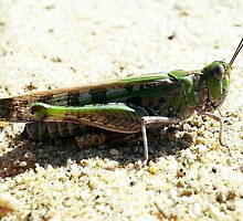 Mr GrassHopper by MonaJud