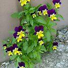 Spring greetings by Ana Belaj