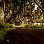 The Dark Hedges by ThomasBlake