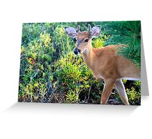 Young Buck at Sunset Greeting Card