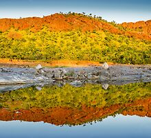 Argyle Reflections by Mieke Boynton