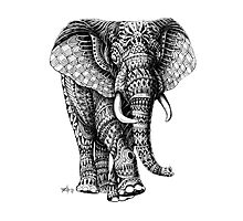 Ornate Elephant v.2 Photographic Print