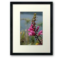 Purple Flower on Shore of Lake Cuicocha Framed Print