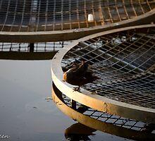 duck days end By Ken Killeen by KenKilleen