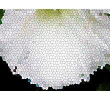 White Morning Glory Mosaic Photographic Print