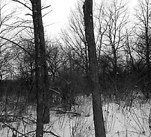 Winter Solace Woods Image 2 (B&W) by Petros Koutoupis