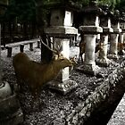 Deer of Nara by Wayne King