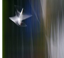 gull upon a river by kindamo