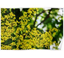 More Dreamy Yellow Flowers Poster