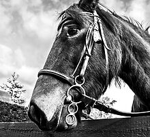 B&W Woody by David Wheeldon