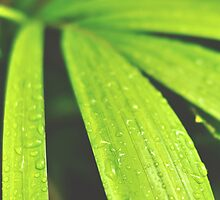 Wet bamboo leaf by agnescsondor