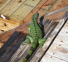 The Green Iguana by Kari Bates