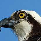 Osprey profile by jozi1