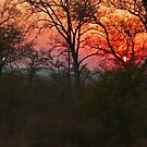 Sunset, South Africa by Margaret  Hyde