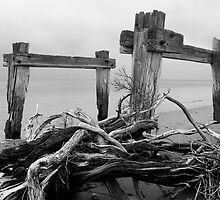 Driftwood by Greg McMahon