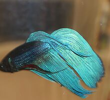 My fighter fish.. by Jeannine de Wet