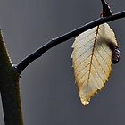 Lone Leaf by relayer51