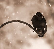 Grackle in the Snow by Otto Danby II