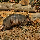 Armadillo by Rick  Friedle