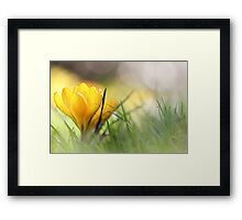 Early in the morning, when it's time.... Framed Print