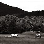 Two Horses on Buffalo Road Duotone by Wayne King
