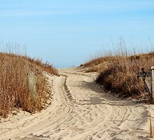 Road To The Beach by Cynthia48