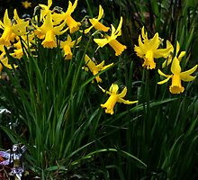A Host Of Golden Daffodils by lynn carter